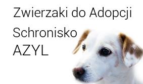 Zwierzaki do adopcji